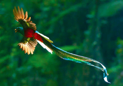National Bird of Guatemala: Questzal