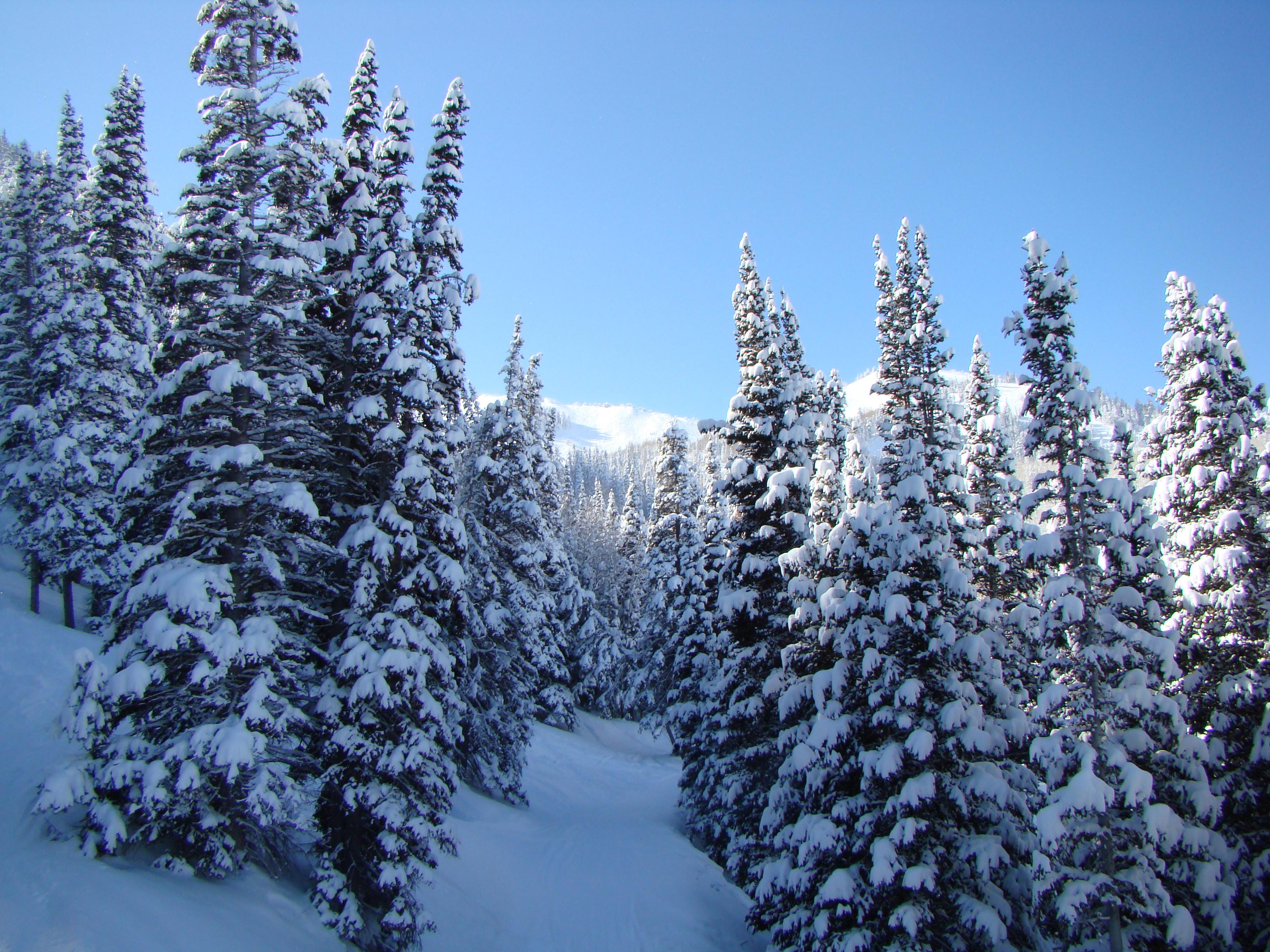 Фото пейзажев природы и зимы 2